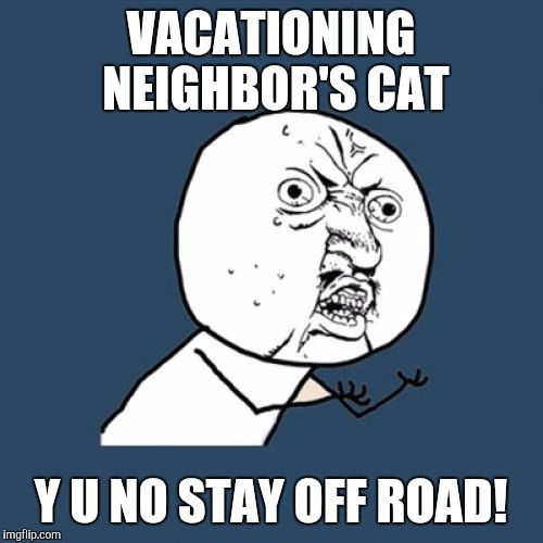 Y U No Meme | VACATIONING NEIGHBOR'S CAT Y U NO STAY OFF ROAD! | image tagged in memes,y u no | made w/ Imgflip meme maker