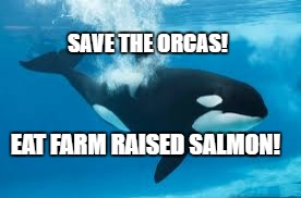 SAVE THE ORCAS! EAT FARM RAISED SALMON! | image tagged in shamu | made w/ Imgflip meme maker