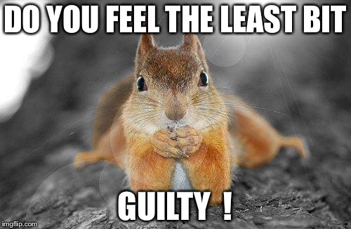 Squirrel therapist | DO YOU FEEL THE LEAST BIT GUILTY  ! | image tagged in squirrel therapist | made w/ Imgflip meme maker