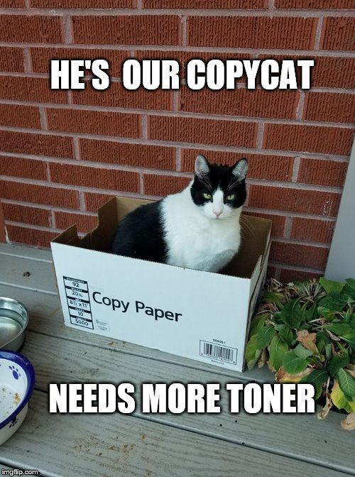 Copycat |  HE'S  OUR COPYCAT; NEEDS MORE TONER | image tagged in copycat,funny cat memes,cat meme | made w/ Imgflip meme maker