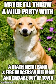 mischievous corgi throwing WILD party | MAYBE I'LL THROW A WILD PARTY WITH A DEATH METAL BAND & FIRE DANCERS WHILE MOM AND DAD ARE OUT OF TOWN | image tagged in mischievous corgi,death metal,party hard,party on,corgi | made w/ Imgflip meme maker