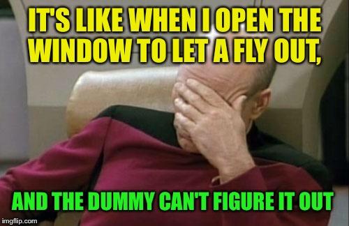 Captain Picard Facepalm Meme | IT'S LIKE WHEN I OPEN THE WINDOW TO LET A FLY OUT, AND THE DUMMY CAN'T FIGURE IT OUT | image tagged in memes,captain picard facepalm | made w/ Imgflip meme maker