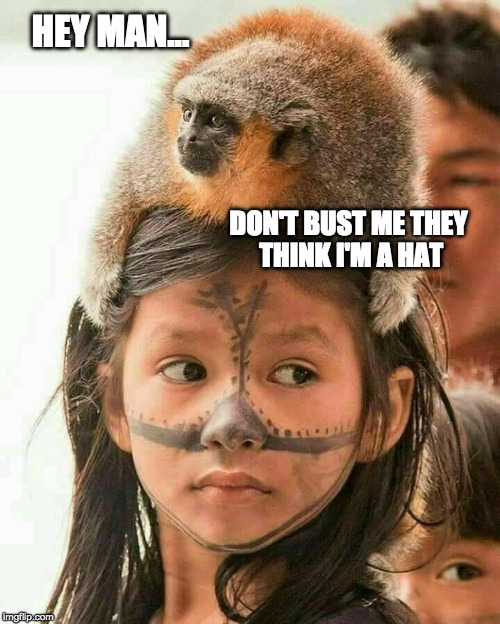 WARdrobes for the Planet of the Apes | HEY MAN... DON'T BUST ME THEY THINK I'M A HAT | image tagged in monkey business,hat,third world problems,tribal,funny | made w/ Imgflip meme maker
