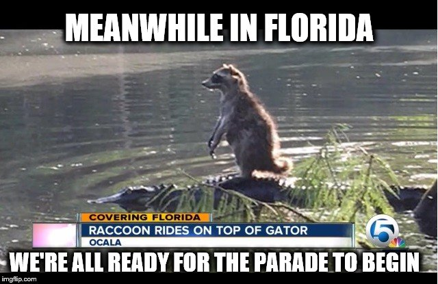 Meanwhile in Florida 2 | MEANWHILE IN FLORIDA WE'RE ALL READY FOR THE PARADE TO BEGIN | image tagged in meanwhile in florida,gator,racoon,4th of july,holiday,parade | made w/ Imgflip meme maker