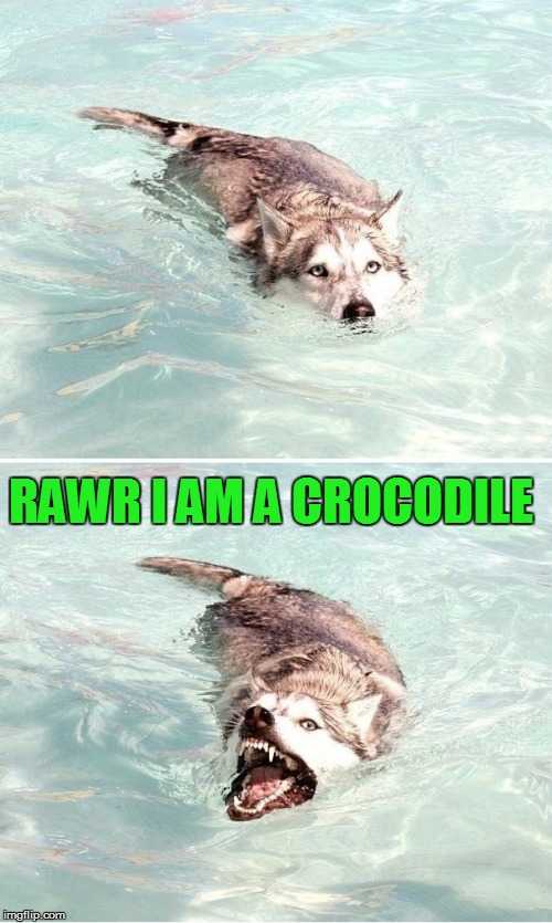 RAWR I AM A CROCODILE | made w/ Imgflip meme maker