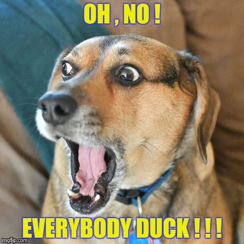 Shocked Dog | OH , NO ! EVERYBODY DUCK ! ! ! | image tagged in shocked dog | made w/ Imgflip meme maker