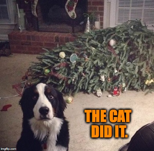 Weak Alibi | THE CAT DID IT. | image tagged in doggo christmas | made w/ Imgflip meme maker