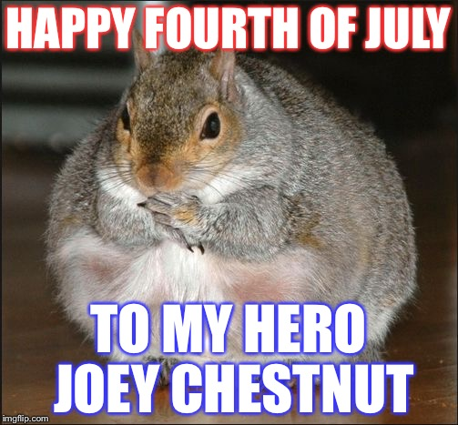 HAPPY FOURTH OF JULY TO MY HERO JOEY CHESTNUT | image tagged in chubby squirrel,memes,funny,4th of july | made w/ Imgflip meme maker