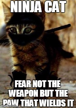 NINJA CAT FEAR NOT THE WEAPON BUT THE PAW THAT WIELDS IT | image tagged in ninja cat | made w/ Imgflip meme maker
