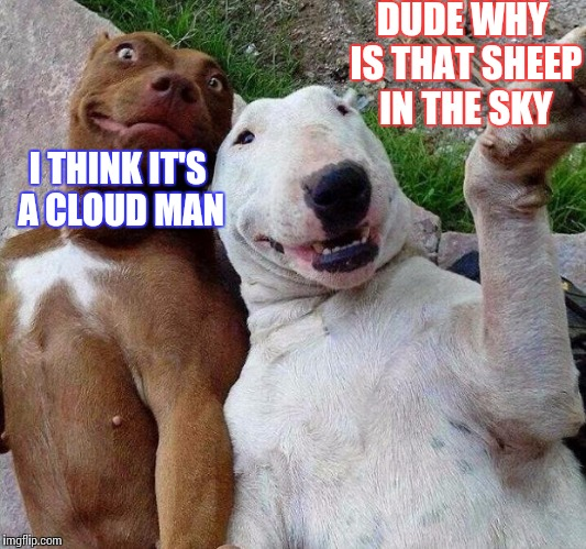 selfie dogs | DUDE WHY IS THAT SHEEP IN THE SKY I THINK IT'S A CLOUD MAN | image tagged in selfie dogs | made w/ Imgflip meme maker