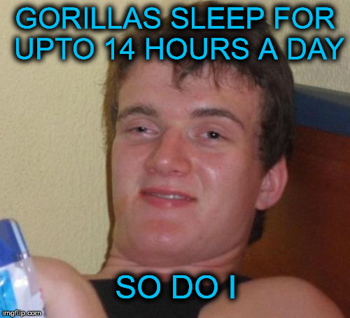 10 Guy fact | GORILLAS SLEEP FOR UPTO 14 HOURS A DAY SO DO I | image tagged in memes,10 guy,fact,gorilla,sleep | made w/ Imgflip meme maker