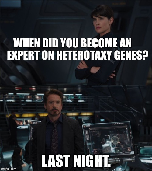 WHEN DID YOU BECOME AN     EXPERT ON HETEROTAXY GENES? LAST NIGHT. | image tagged in avengers | made w/ Imgflip meme maker