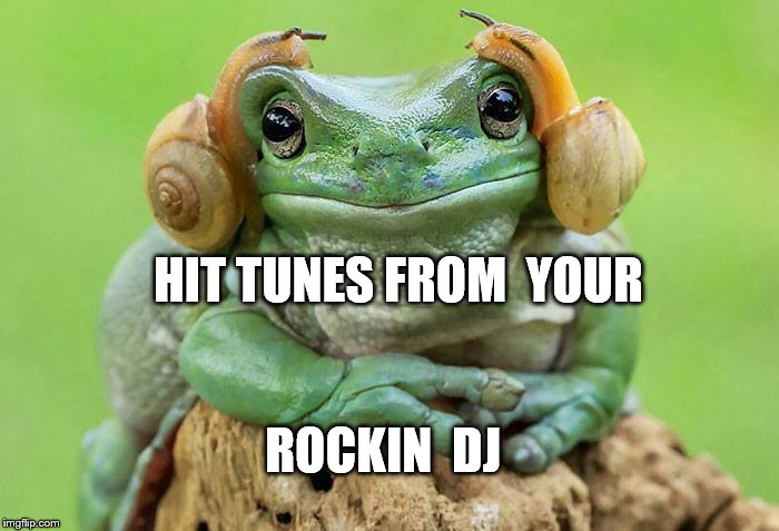 Rockin DJ | HIT TUNES FROM  YOUR ROCKIN  DJ | image tagged in animal meme,frog thinking | made w/ Imgflip meme maker