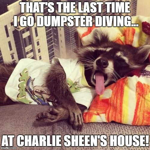 Hungover Raccoon | THAT'S THE LAST TIME I GO DUMPSTER DIVING... AT CHARLIE SHEEN'S HOUSE! | image tagged in raccoon,hungover,funny animals,charlie sheen | made w/ Imgflip meme maker