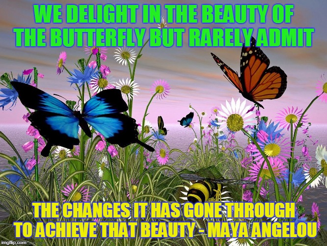 WE DELIGHT IN THE BEAUTY OF THE BUTTERFLY BUT RARELY ADMIT THE CHANGES IT HAS GONE THROUGH TO ACHIEVE THAT BEAUTY - MAYA ANGELOU | image tagged in gboyega | made w/ Imgflip meme maker