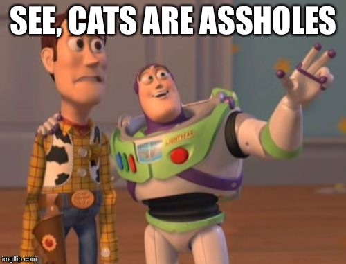 X, X Everywhere Meme | SEE, CATS ARE ASSHOLES | image tagged in memes,x x everywhere | made w/ Imgflip meme maker