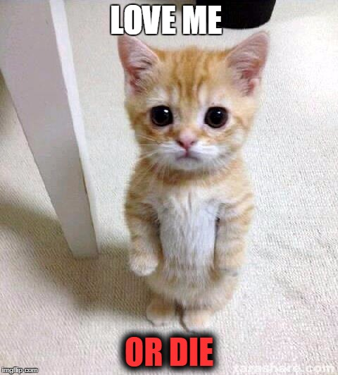 Cute Cat Meme | LOVE ME OR DIE | image tagged in memes,cute cat | made w/ Imgflip meme maker