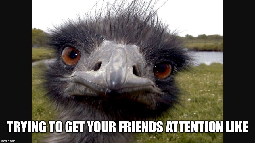 Attention is scarce | TRYING TO GET YOUR FRIENDS ATTENTION LIKE | image tagged in enraged emu | made w/ Imgflip meme maker