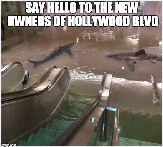SAY HELLO TO THE NEW OWNERS OF HOLLYWOOD BLVD | image tagged in shark mall | made w/ Imgflip meme maker