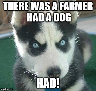 THERE WAS A FARMER HAD A DOG HAD! | image tagged in angry husky puppy | made w/ Imgflip meme maker