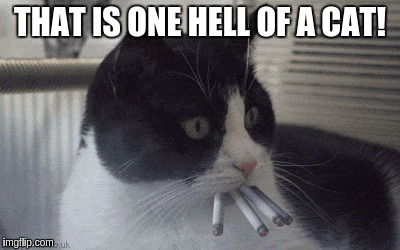 THAT IS ONE HELL OF A CAT! | made w/ Imgflip meme maker