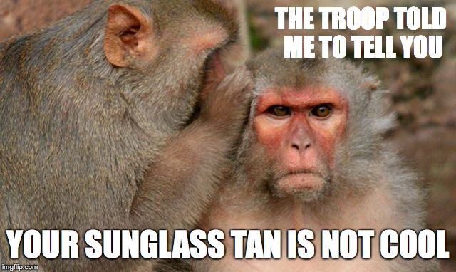 monkey | THE TROOP TOLD ME TO TELL YOU YOUR SUNGLASS TAN IS NOT COOL | image tagged in monkey | made w/ Imgflip meme maker