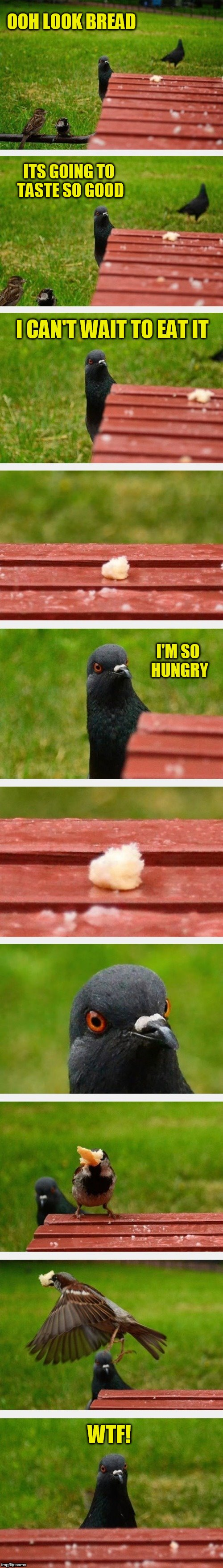 Disappointed bird is so disappointed! | OOH LOOK BREAD WTF! ITS GOING TO TASTE SO GOOD I CAN'T WAIT TO EAT IT I'M SO HUNGRY | image tagged in memes,pigeon,bird,stolen food,funny memes,disappointment | made w/ Imgflip meme maker