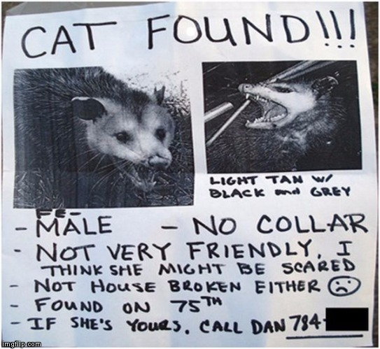 . | image tagged in cat found possum | made w/ Imgflip meme maker