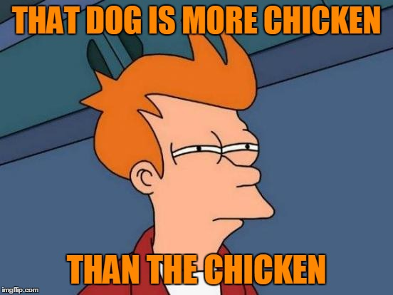 Futurama Fry Meme | THAT DOG IS MORE CHICKEN THAN THE CHICKEN | image tagged in memes,futurama fry | made w/ Imgflip meme maker