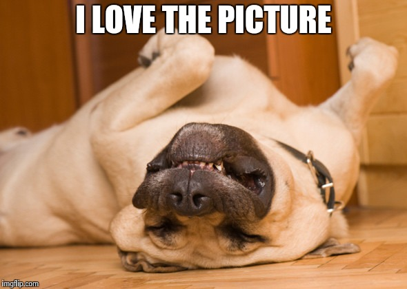 Sleeping dog | I LOVE THE PICTURE | image tagged in sleeping dog | made w/ Imgflip meme maker