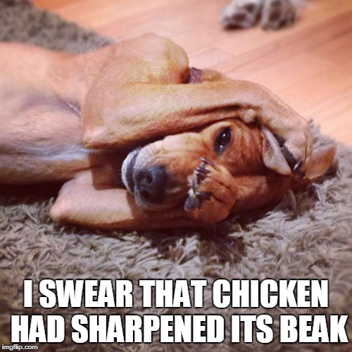 I SWEAR THAT CHICKEN HAD SHARPENED ITS BEAK | made w/ Imgflip meme maker