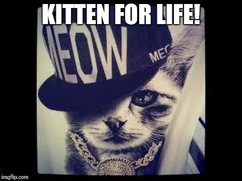 New York Cats Be Like… | KITTEN FOR LIFE! | image tagged in memes,funny,cats,kittens,new york | made w/ Imgflip meme maker