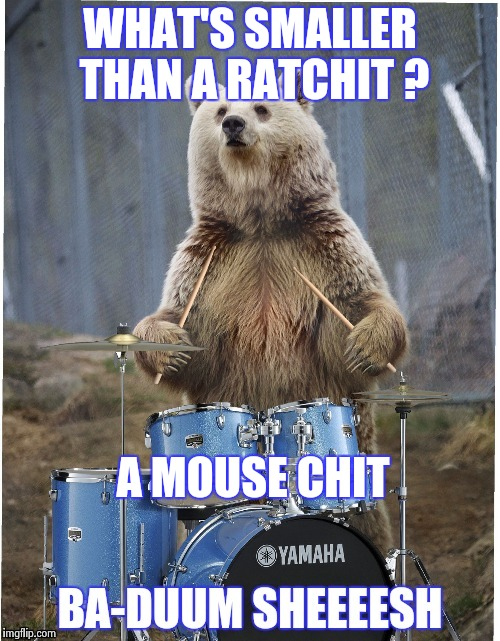 I apologize in advance for this silliness | WHAT'S SMALLER THAN A RATCHIT ? A MOUSE CHIT | image tagged in drummer bear,bad puns,sorry,ouch | made w/ Imgflip meme maker