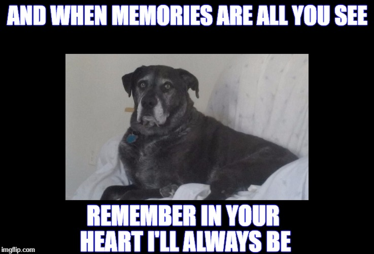 Rest in peace my boy | AND WHEN MEMORIES ARE ALL YOU SEE REMEMBER IN YOUR HEART I'LL ALWAYS BE | image tagged in goodbye,dog | made w/ Imgflip meme maker