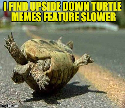 I FIND UPSIDE DOWN TURTLE MEMES FEATURE SLOWER | made w/ Imgflip meme maker
