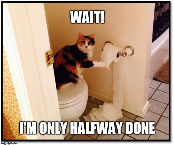 WAIT! I'M ONLY HALFWAY DONE | image tagged in cats | made w/ Imgflip meme maker