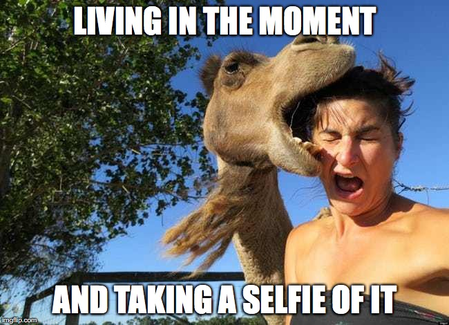 how else would we see this | LIVING IN THE MOMENT AND TAKING A SELFIE OF IT | image tagged in meme,selfie,camel | made w/ Imgflip meme maker
