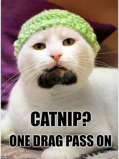 BEARDED HIPSTER CAT drinks milk out of a mason jar and poops in eco friendly, organic, fair trade cat litter. | CATNIP? ONE DRAG PASS ON | image tagged in cats,cat,hipster,hipster kitty,hipster cat | made w/ Imgflip meme maker