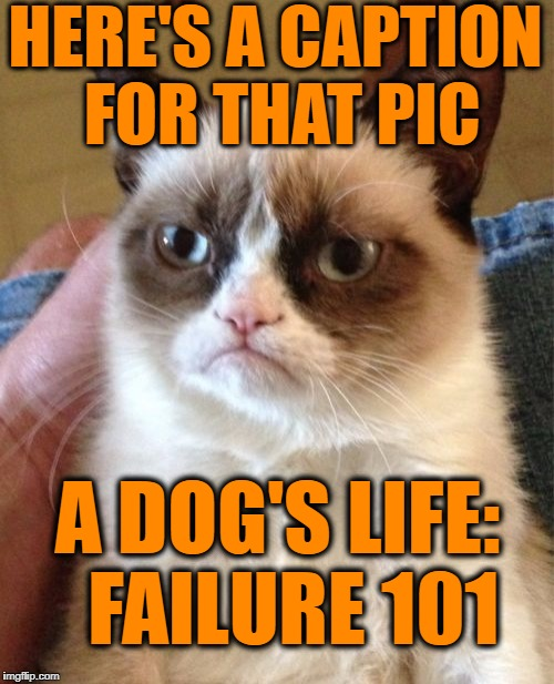 Grumpy Cat Meme | HERE'S A CAPTION FOR THAT PIC A DOG'S LIFE:  FAILURE 101 | image tagged in memes,grumpy cat | made w/ Imgflip meme maker
