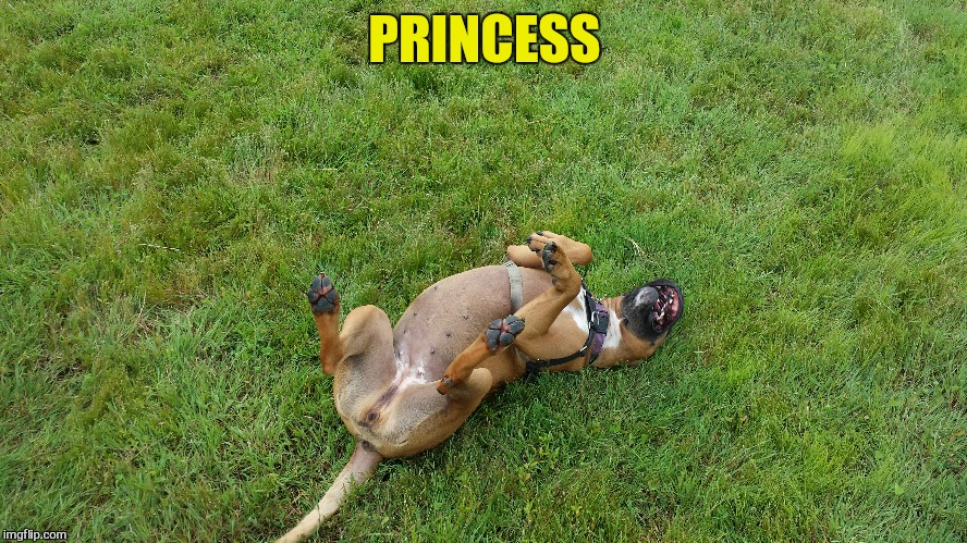 PRINCESS | made w/ Imgflip meme maker