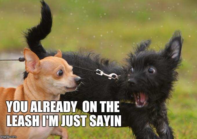YOU ALREADY  ON THE LEASH I'M JUST SAYIN | image tagged in roof,funny memes,memes,dog | made w/ Imgflip meme maker