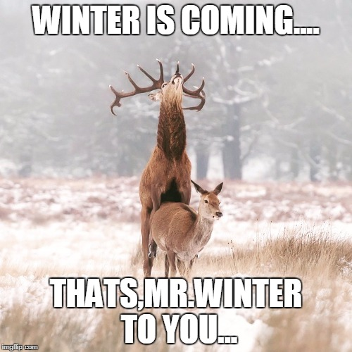 WINTER IS COMING.... THATS,MR.WINTER TO YOU... | image tagged in winter is coming | made w/ Imgflip meme maker