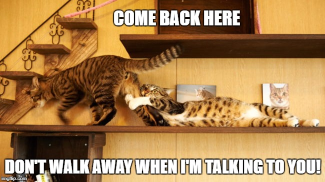 Come back here  | COME BACK HERE DON'T WALK AWAY WHEN I'M TALKING TO YOU! | image tagged in funny cats,i haven't finished talking to you | made w/ Imgflip meme maker