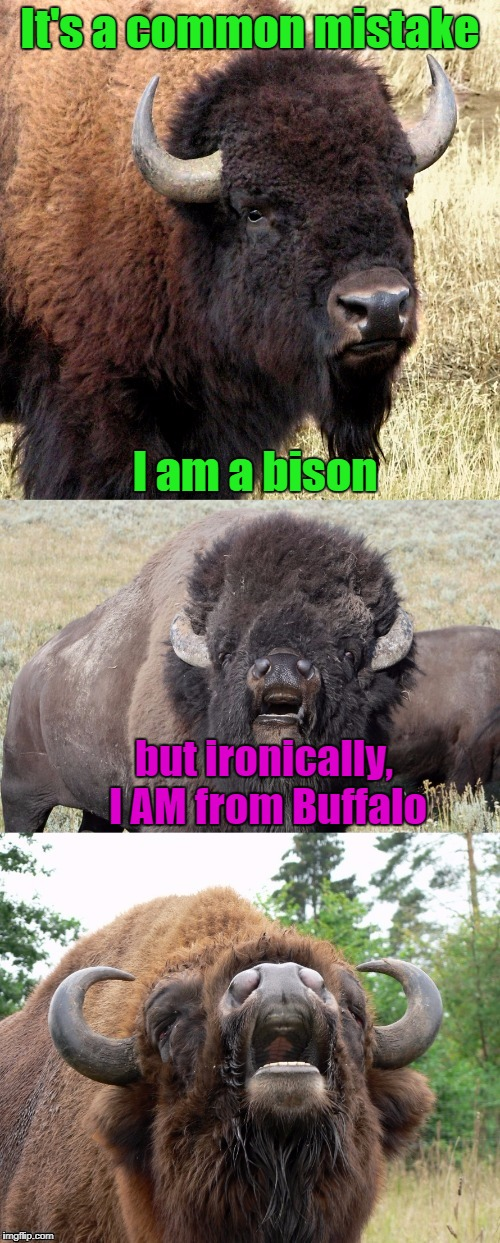 "And I do mean ""bad pun"" 