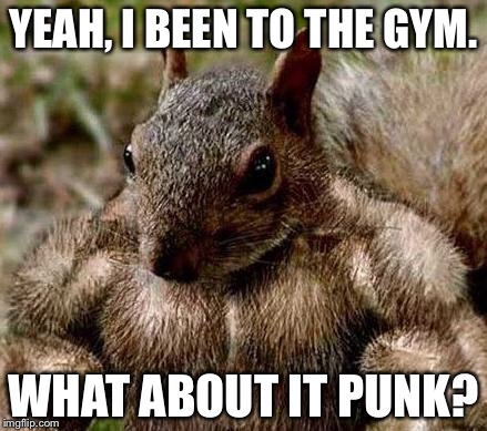YEAH, I BEEN TO THE GYM. WHAT ABOUT IT PUNK? | image tagged in muscle squirrel | made w/ Imgflip meme maker