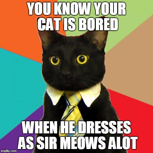 Business Cat Meme | YOU KNOW YOUR CAT IS BORED WHEN HE DRESSES AS SIR MEOWS ALOT | image tagged in memes,business cat | made w/ Imgflip meme maker
