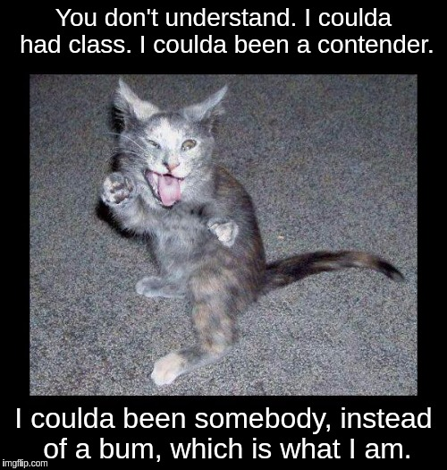 You don't understand. I coulda had class. I coulda been a contender. I coulda been somebody, instead of a bum, which is what I am. | image tagged in crazy looking kitten with frame | made w/ Imgflip meme maker