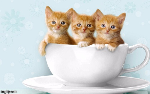 Tired of the political memes and the endless CNN talk? Here's some cute kittens to upvote.  | . | image tagged in memes,kittens,cute kittens | made w/ Imgflip meme maker