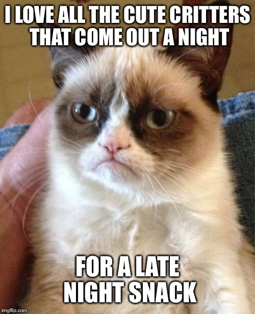 Grumpy Cat Meme | I LOVE ALL THE CUTE CRITTERS THAT COME OUT A NIGHT FOR A LATE NIGHT SNACK | image tagged in memes,grumpy cat | made w/ Imgflip meme maker