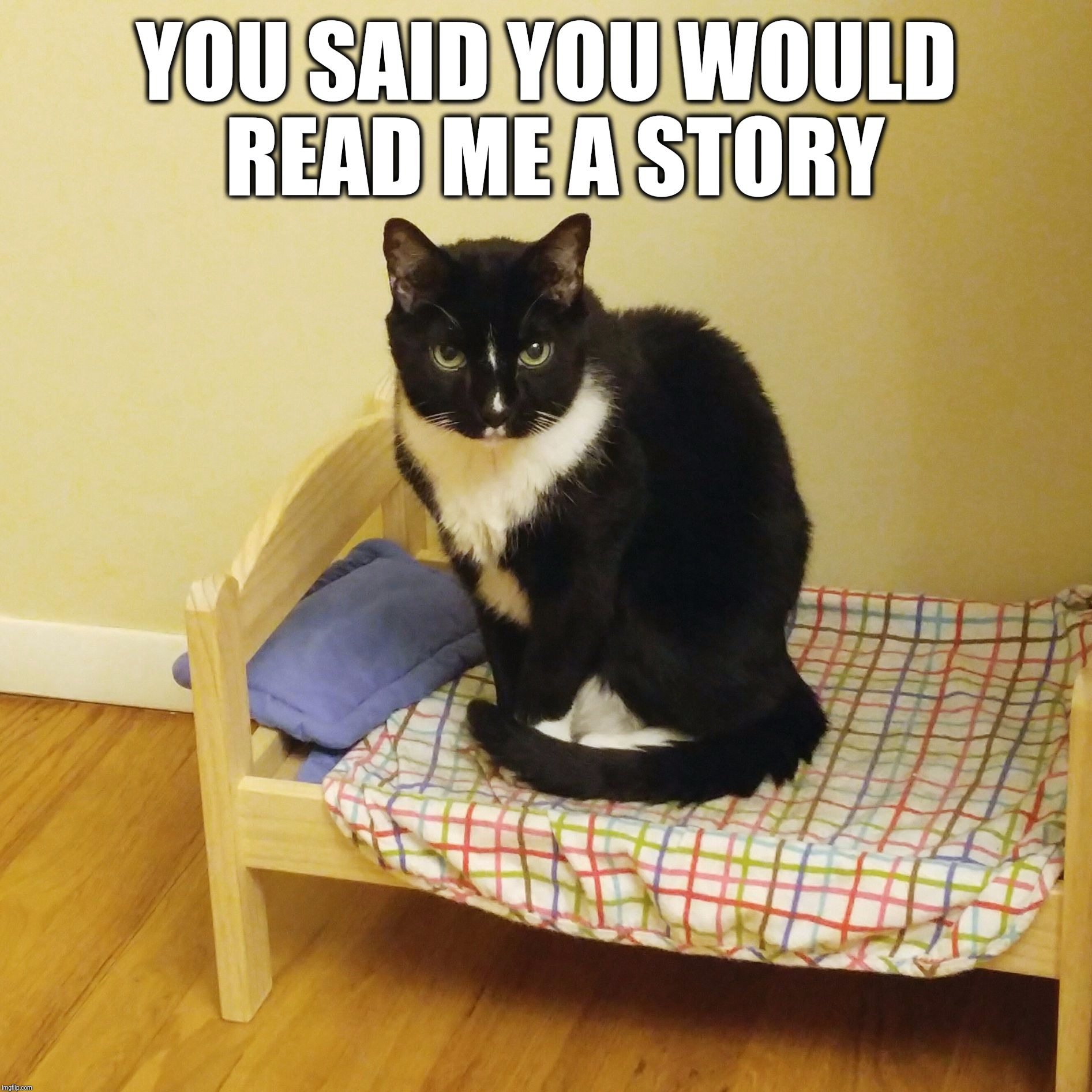 You said you would read me a story | YOU SAID YOU WOULD READ ME A STORY | image tagged in bert the cat,cats,bedtime,read me a story,funny,cute | made w/ Imgflip meme maker